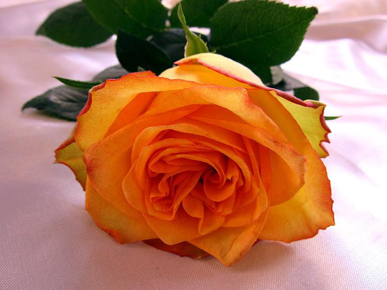 Bestattungsinstitut Kuhne Rat Hilfe Trauerfall